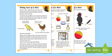 KS1 How to Look After a Bird Differentiated Fact File