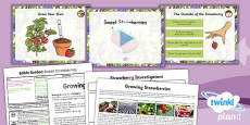 PlanIt - D&T LKS2 - Edible Garden Lesson 3: Sweet Strawberries Lesson Pack