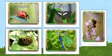 Minibeasts Display Photos