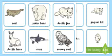 Arctic Animals and their Young Matching Cards