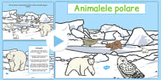 Winter Arctic Animals Habitat PowerPoint Romanian