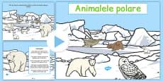 Winter Arctic Animals Habitat PowerPoint Romanian