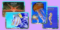 Sea Creature Display Photos Romanian Translation