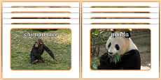 Jungle & Rainforest Animals Display Photos