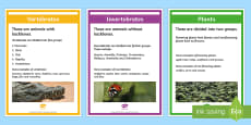 Classify Living Organisms Display Posters