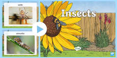 * NEW * Insects Photo  PowerPoint