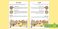 * NEW * Camel Fact File Arabic/English