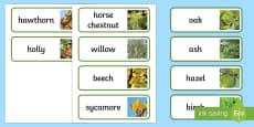 * NEW * Irish Trees Word Cards