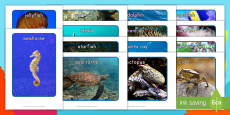 * NEW * Ocean Animals Display Photos