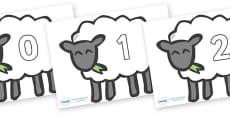 Numbers 0-50 on Sheep