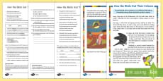 How The Birds Got Their Colours Differentiated Reading Comprehension Activity