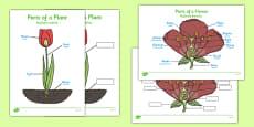 Parts of a Plant Polish Translation