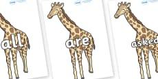 Tricky Words on Giraffe