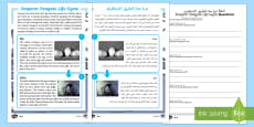 Emperor Penguin Life Cycle Differentiated Reading Comprehension Activity Arabic/English