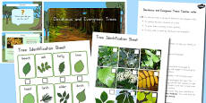 Deciduous and Evergreen Trees Task Setter PowerPoint and Activity Pack