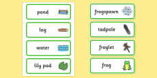 Life Cycle of a Frog Word Cards