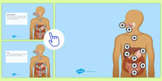 Digestive System Picture Hotspots