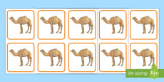 * NEW * Camel Number Bonds to 20 Matching Cards