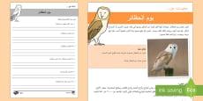 بوم الحظائر- أوراق عمل للفهم القرائي