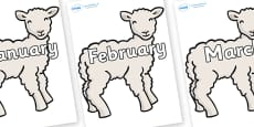 Months of the Year on Lambs