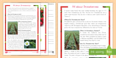 * NEW * All About Strawberries Differentiated Reading Comprehension Activity
