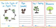 Australia - Apple Tree Life Cycle Workbook