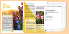 GCSE Style Reading and Writing Assessment Bumblebees