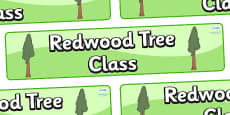 Redwood Themed Classroom Display Banner