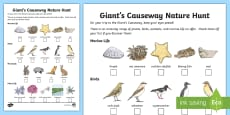 Giant's Causeway Nature Hunt Activity Sheet