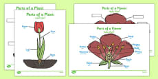 Parts of a Plant Arabic Translation