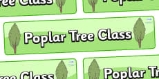 Poplar Tree Themed Classroom Display Banner