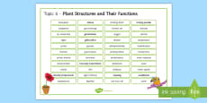 Edexcel Biology Plant Structures and Their Functions Word Mat