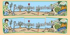 Cultivarea plantelor - Banner
