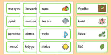 Growth Topic Word Cards Polish
