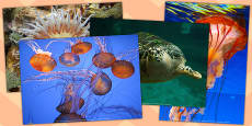 Tropical Fish Photo Pack (Under the Sea)
