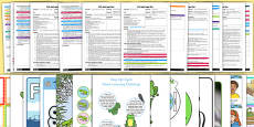 EYFS Life Cycle of a Frog Adult Input Planning and Resource Pack