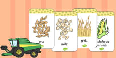 Harvest Grains Flash Cards Romanian