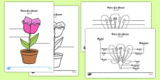 Parts of a Plant and Flower Labelling Worksheet Arabic Translation