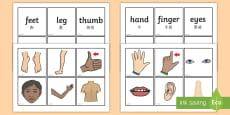 * NEW * Parts of the body word and picture matching Cards English/Mandarin Chinese