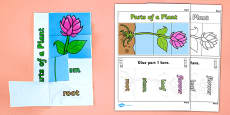 Parts of a Plant Foldable Interactive Visual Aid Template