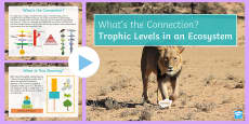 Trophic Levels in an Ecosystem What's the Connection? PowerPoint