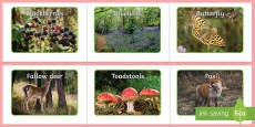 Woodland Creatures and Natural Objects Photo Pack