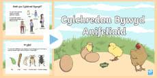 Pwerbwynt Cylchred Bywyd Anifeiliaid