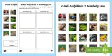 Didoli Anifeiliaid y Goedwig Law Taflen Weithgaredd