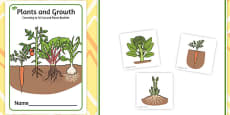 Plants and Growth Counting to 10 Cut and Paste Booklet