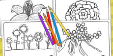 Flowers Colouring Sheets (Australia)