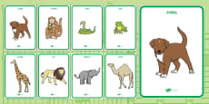 Display Posters to Support Teaching on Dear Zoo