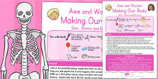 Making Our Body Skin Bones and Muscle Awe and Wonder Science Activity