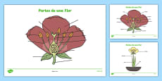 Parts of a Plant and Flower Labelling Activity Sheet Spanish