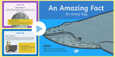 * NEW * KS1 An Amazing Fact a Day June PowerPoint